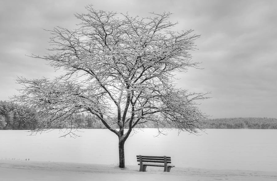 Winter Photograph - Winters Calm by Diana Nault