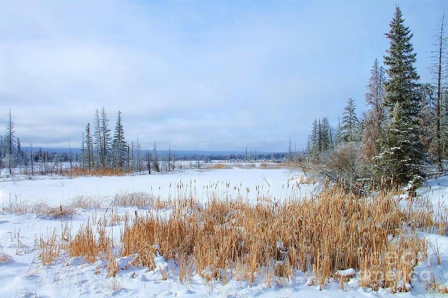 Winter Scenes Photograph - Winters Dream by Roland Stanke