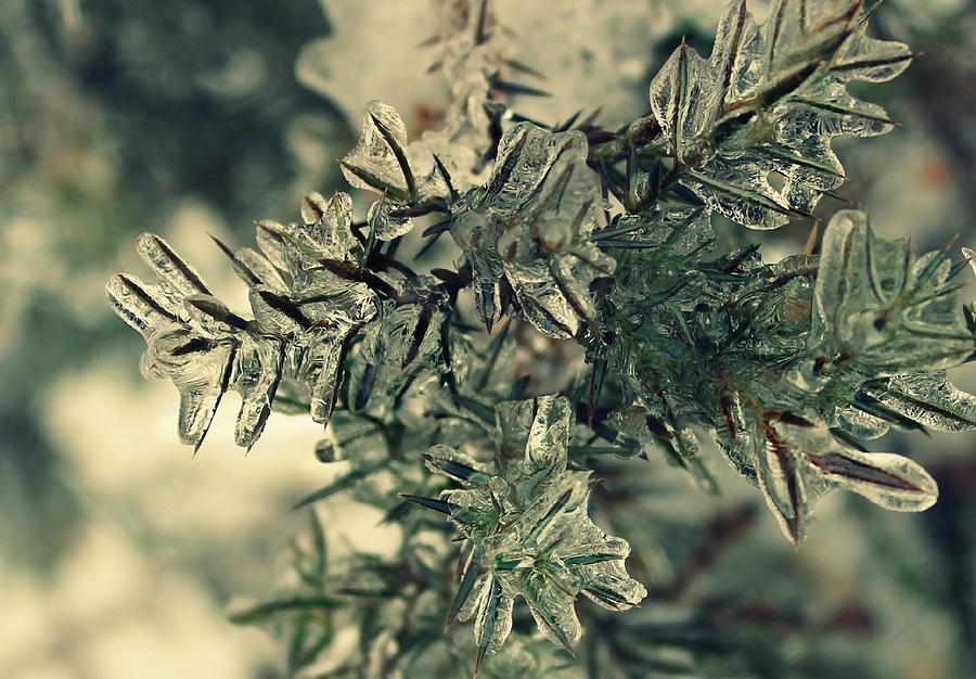Winter Photograph - Winters Freeze by Candice Trimble