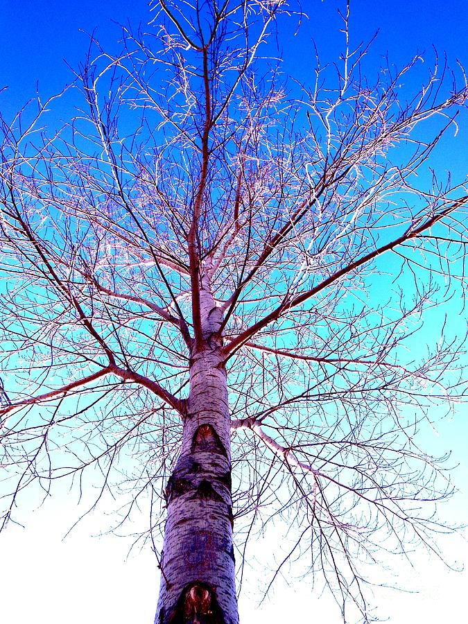 Tree Photograph - Winters Freeze by Sharon Costa