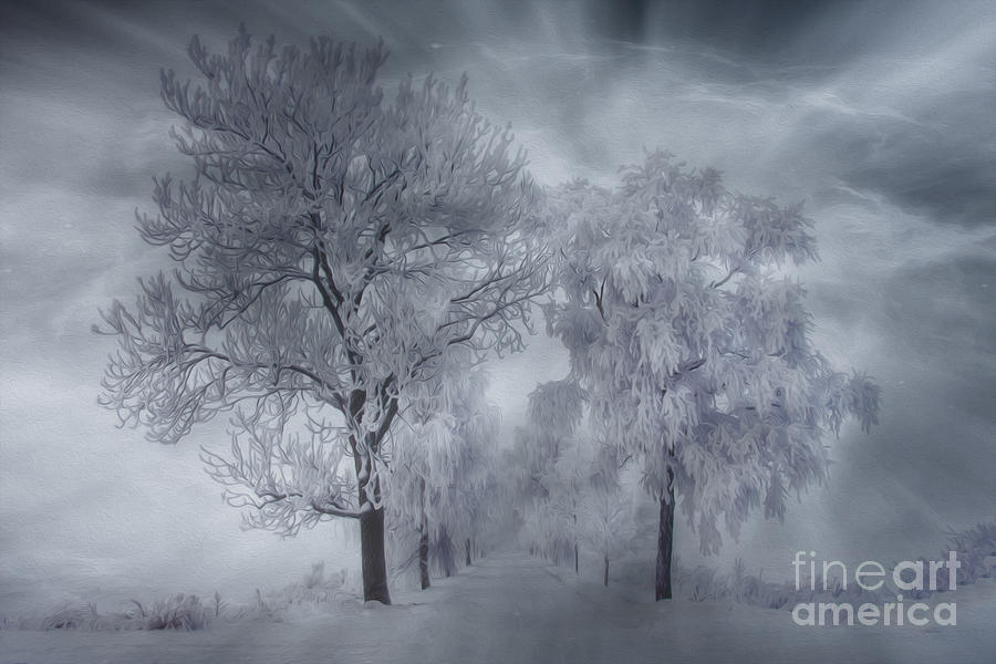 Artist Photograph - Winters Magic by Veikko Suikkanen