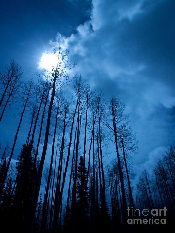Colorado Photograph - Winters Sky by Dana Kern