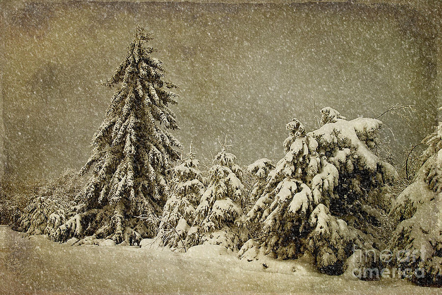 Snow Photograph - Winters Wrath by Lois Bryan