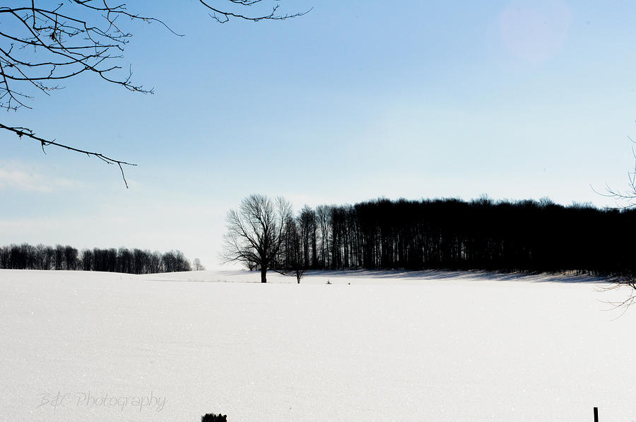 Trees Photograph - Winterscape 2  by BandC  Photography
