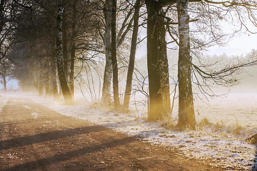 Winter...where Are You Photograph by Bob Van Den Berg Photography