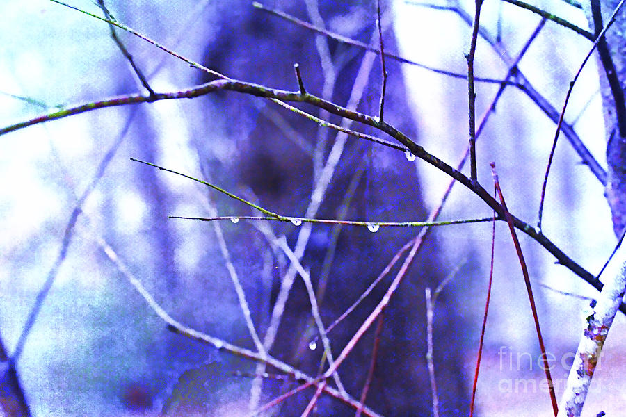 Lensbaby Photograph - Wintry by Judi Bagwell