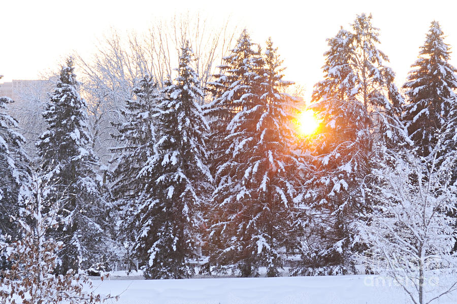 Nature Photograph - Wintry Sunset by Larry Ricker