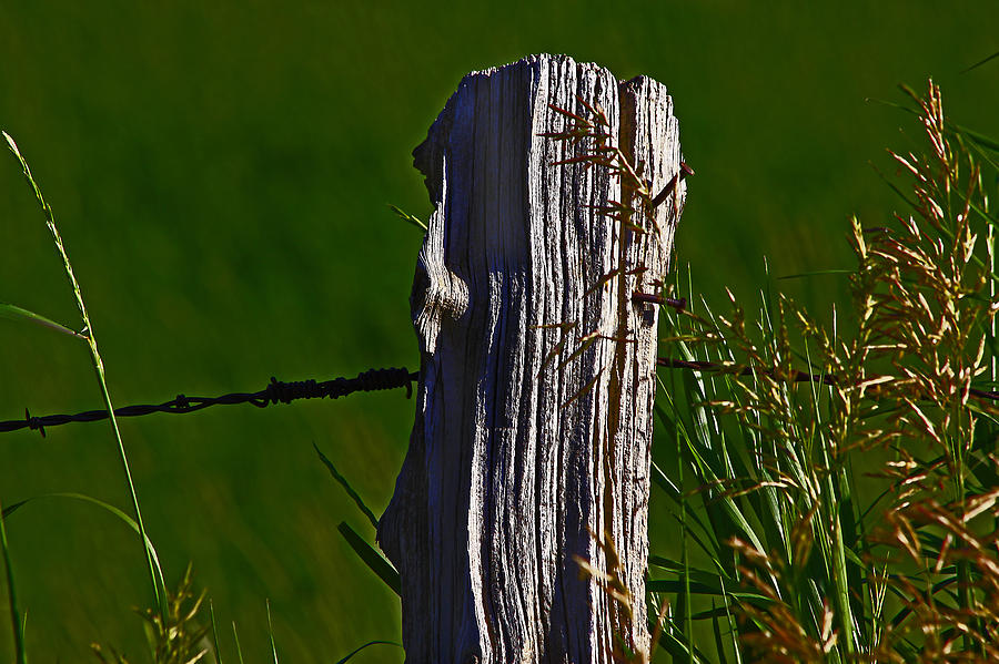 Nature Photograph - Wired by David Kehrli