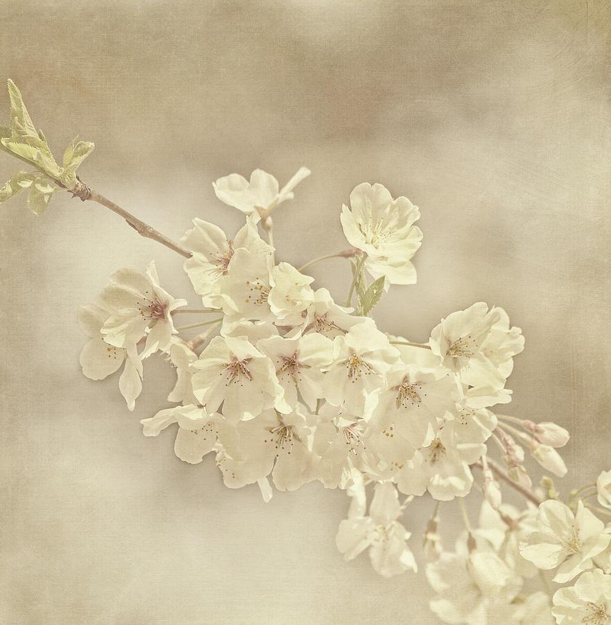 Flower Photograph - Wisdom by Kim Hojnacki