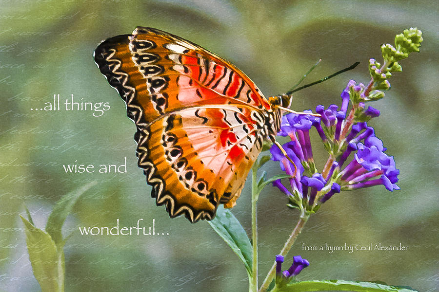 Butterflies Photograph - Wise And Wonderful by Karen Stephenson