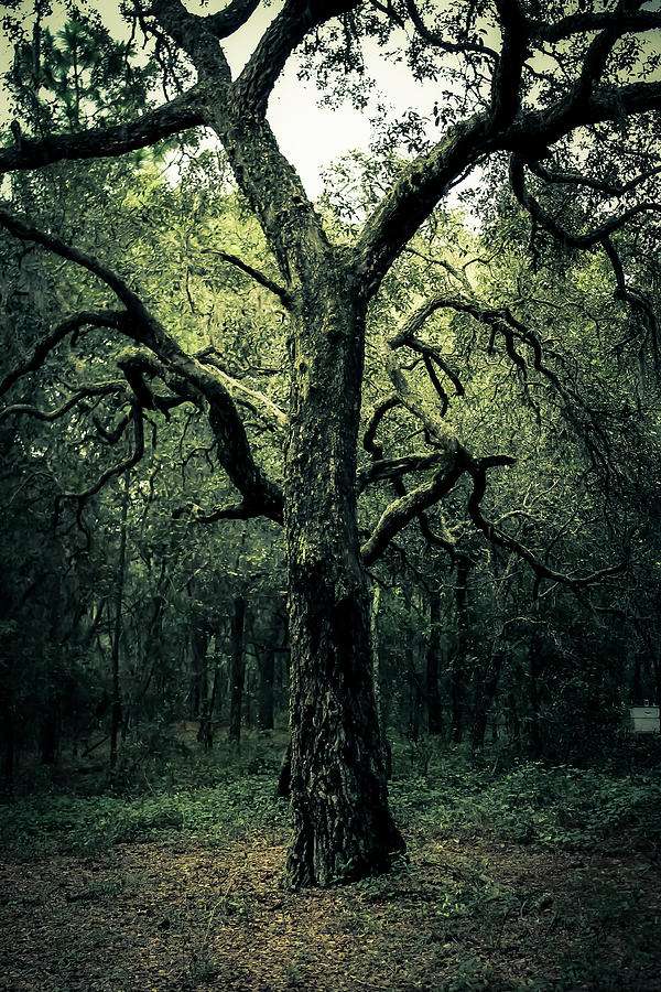 Tree Photograph - Wise Old Tree by Robin Lewis