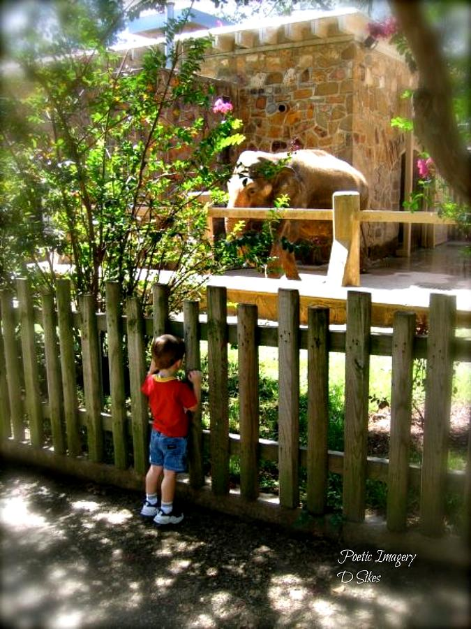 Zoo Photograph - Wishes by Debbie Sikes