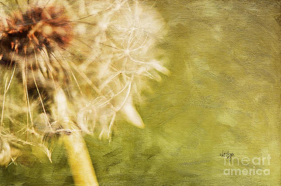 Dandelion Photograph - Wishful Thinking by Lois Bryan