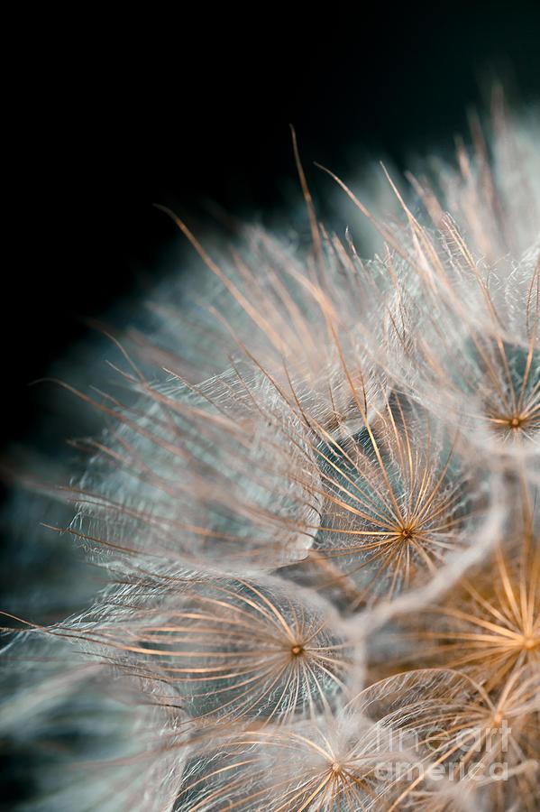 Dandelion Photograph - Wishing For Tomorrow by Jan Bickerton