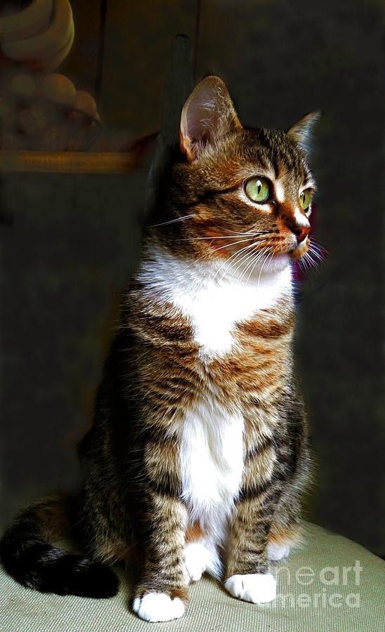 Cat Photograph - Wistful  by Diana Besser