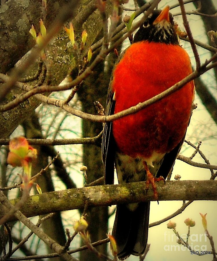 Robin Photograph - With A Song In My Heart by Tami Quigley