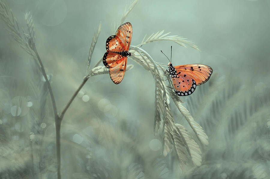 Butterfly Photograph - With You by Edy Pamungkas