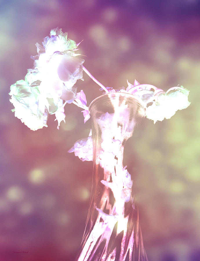 Roses Photograph - Withering Away - Magenta Sparkle by Shawna Rowe
