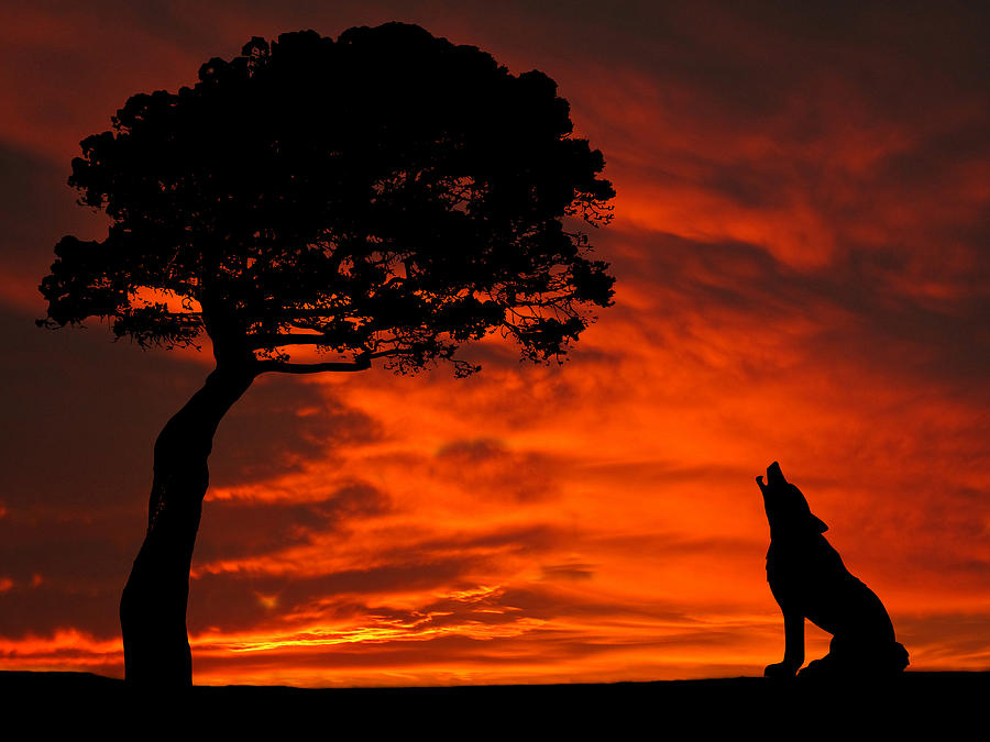 Wolf Calling For Mate Sunset Silhouette Series Photograph by David Dehner