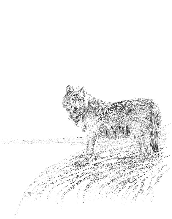 Wolf by Carl Genovese