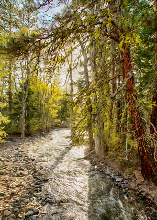 North Cascades Photograph - Wolf Creek Afternoon Light by Omaste Witkowski