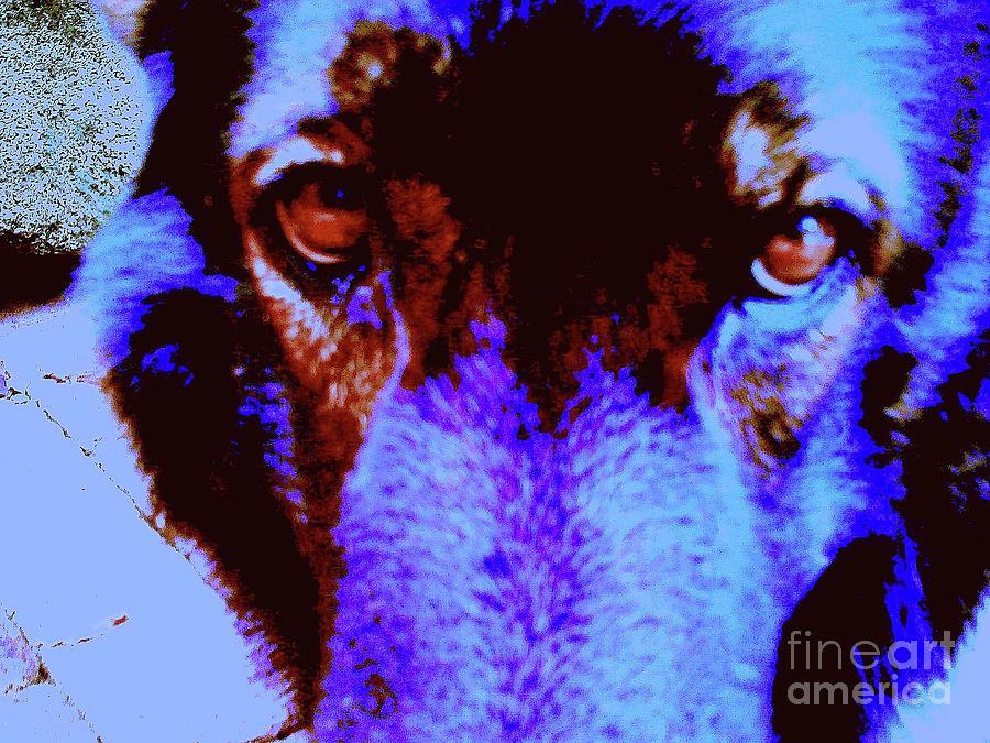 Digital Photography Digital Art - Wolf Eyes by Nina Kaye