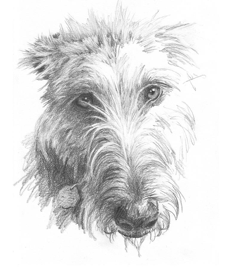 Wolf Hound Pencil Portrait Painting by Mike Theuer