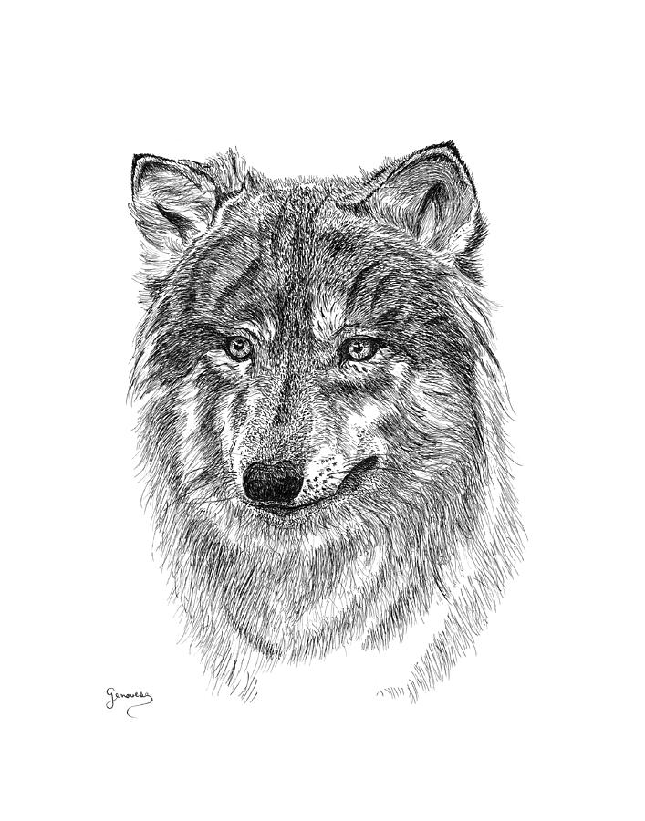 Wolf II by Carl Genovese