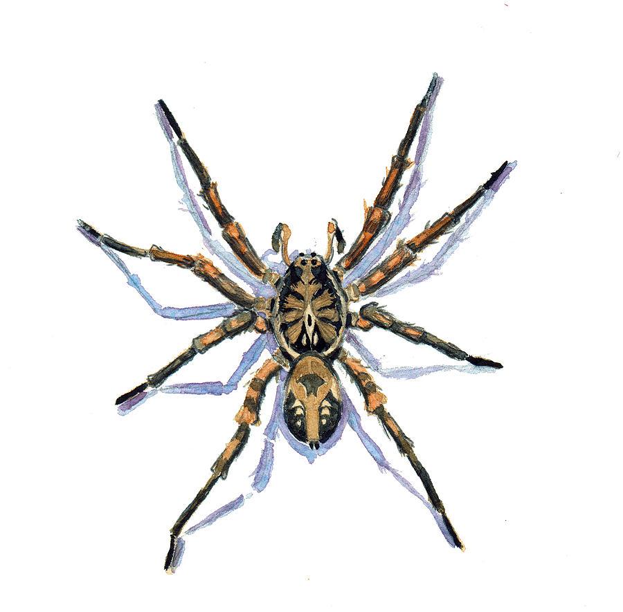Arachnids Painting - Wolf Spider by Katherine Miller
