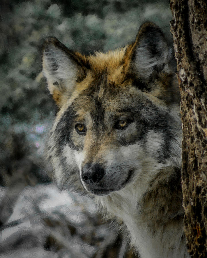 Wolf Digital Art - Wolf Upclose Painterly by Ernie Echols