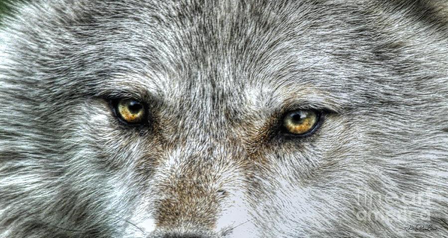 Wolf Photograph - Wolf Wisdom by Skye Ryan-Evans
