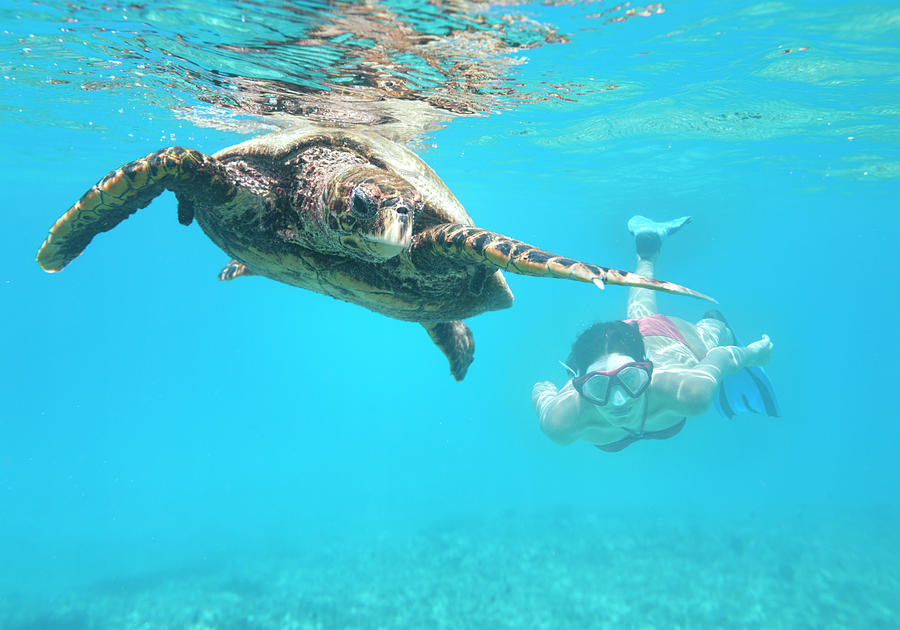 Woman Diving With A Hawksbill Sea Photograph by 4fr