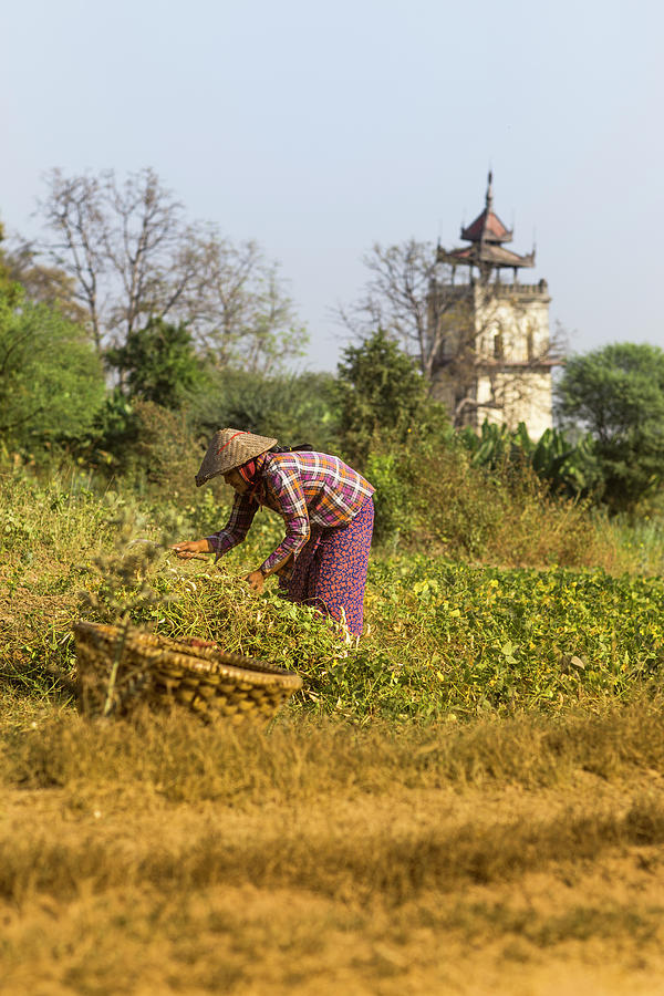 Woman Weeding At Nanmyin Tower Photograph by Merten Snijders