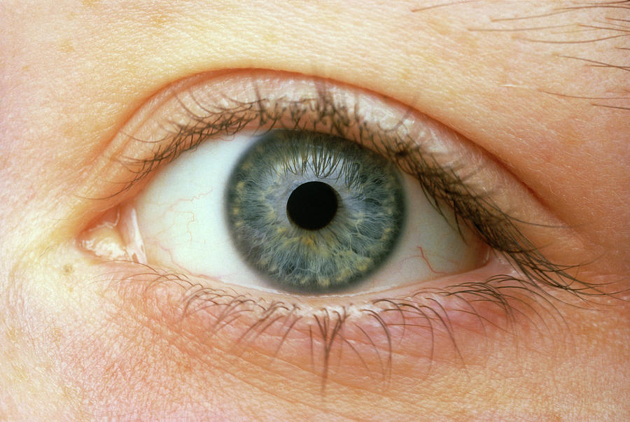 Human Body Photograph - Womans Right Eye by Martin Dohrn/science Photo Library