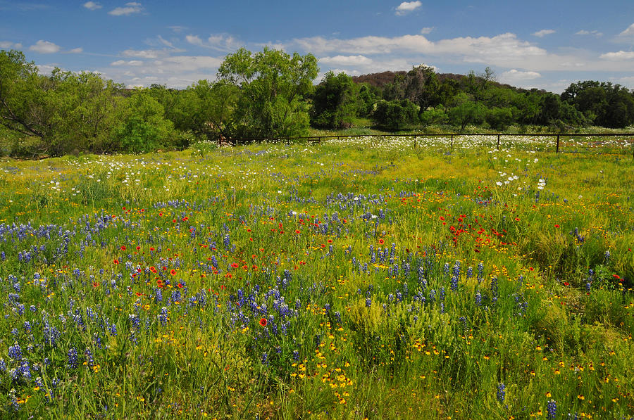 Wildflowers Photograph - Wonder-filled Meadows by Lynn Bauer