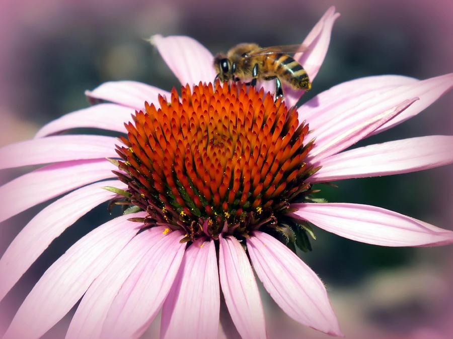 Echinacea Photograph - Wonder Of Pollen by Karen Wiles