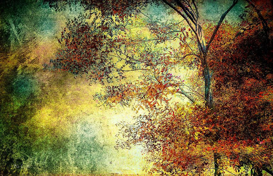 Landscape Photograph - Wondering by Bob Orsillo