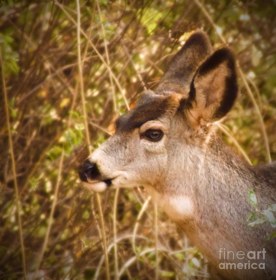 Deer Photograph - Wondering Deer by Kimberly Maiden