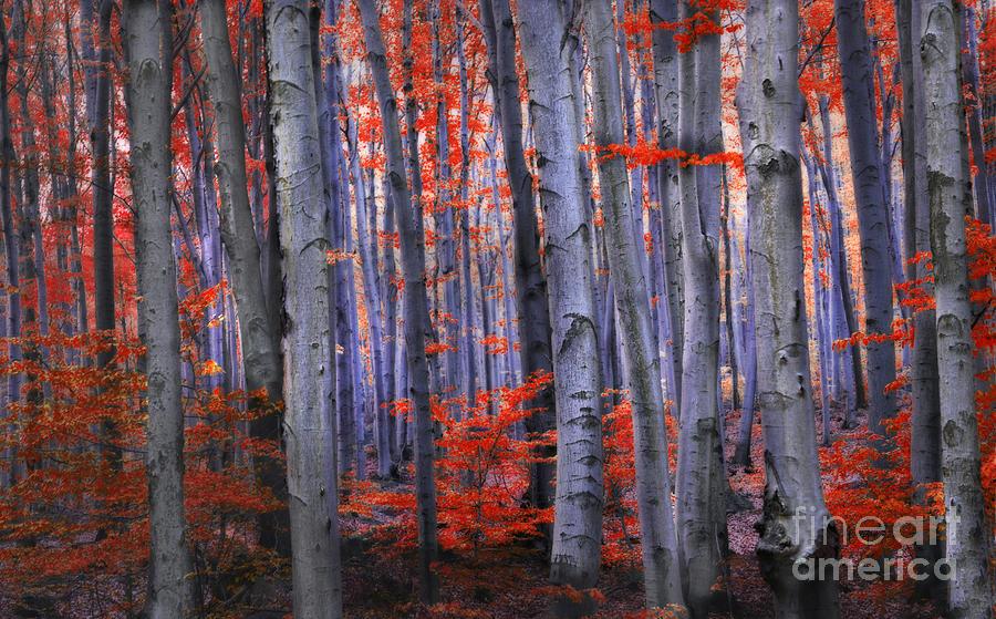 Birch Photograph - Wonderland by Lilianna Sokolowska
