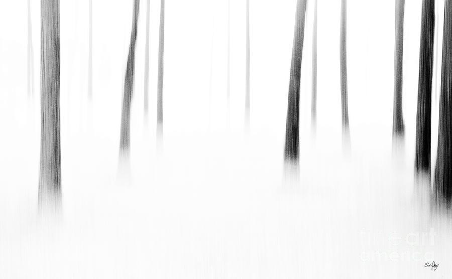 Abstract Photograph - Wonderland by Scott Pellegrin