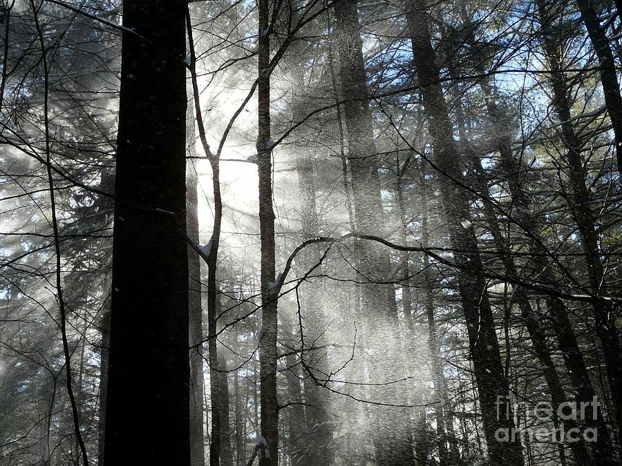Winter Photograph - Wondrous Light by Avis  Noelle