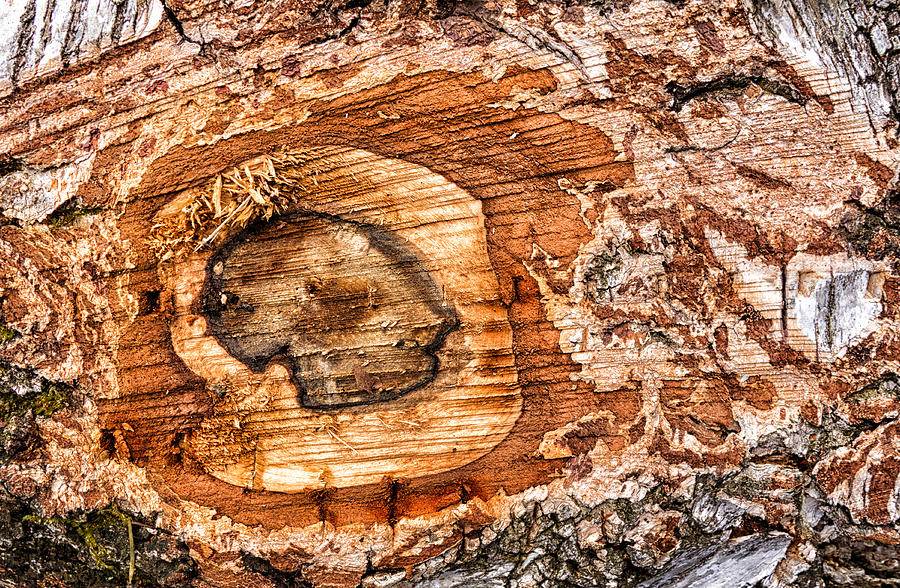 Wood Photograph - Wood Detail by Matthias Hauser