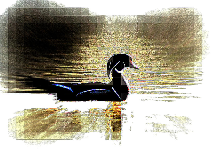 Wood Duck - Modern Photograph