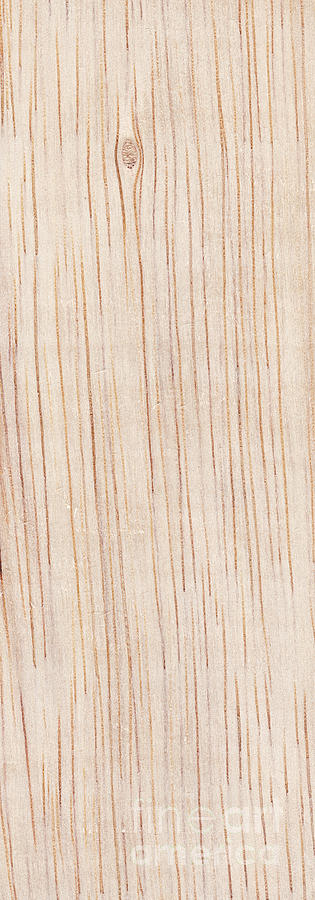 Wood Grain Panel Photograph