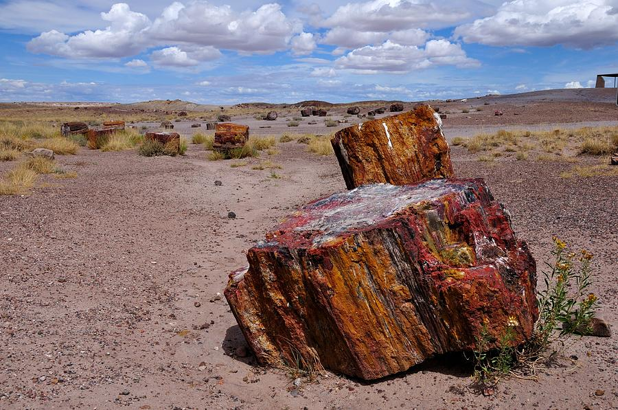 Petrified Forest National Park Photograph - Wood To Stone by Gene Sherrill