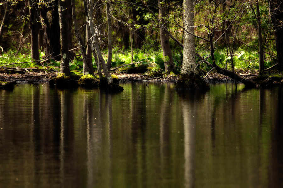 Landscape Photograph - Wooded Reflection by Karol Livote