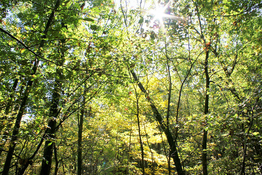 Wooded Sunshine by Inspired Arts