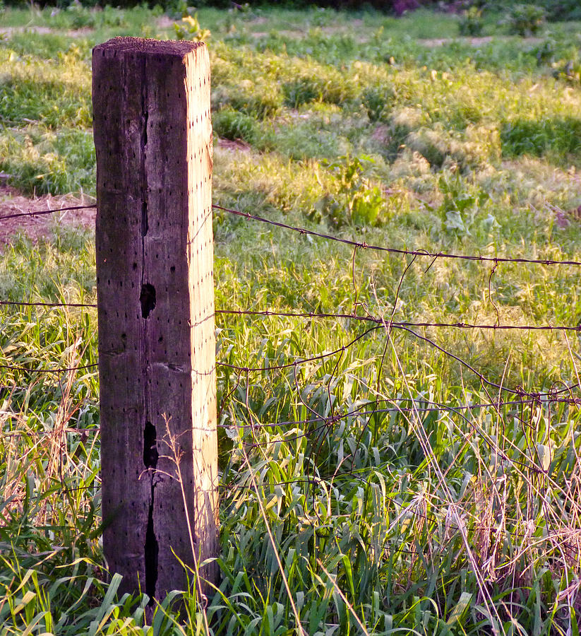 Spring Photograph - Wooden Fencepost by Tracy Salava