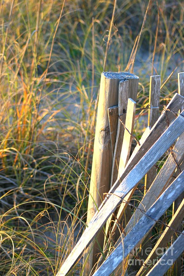 Post Photograph - Wooden Post And Fence At The Beach by Nadine Rippelmeyer