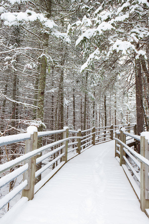 Wooden Walkway And Railings Covered Photograph by Susan Dykstra / Design Pics